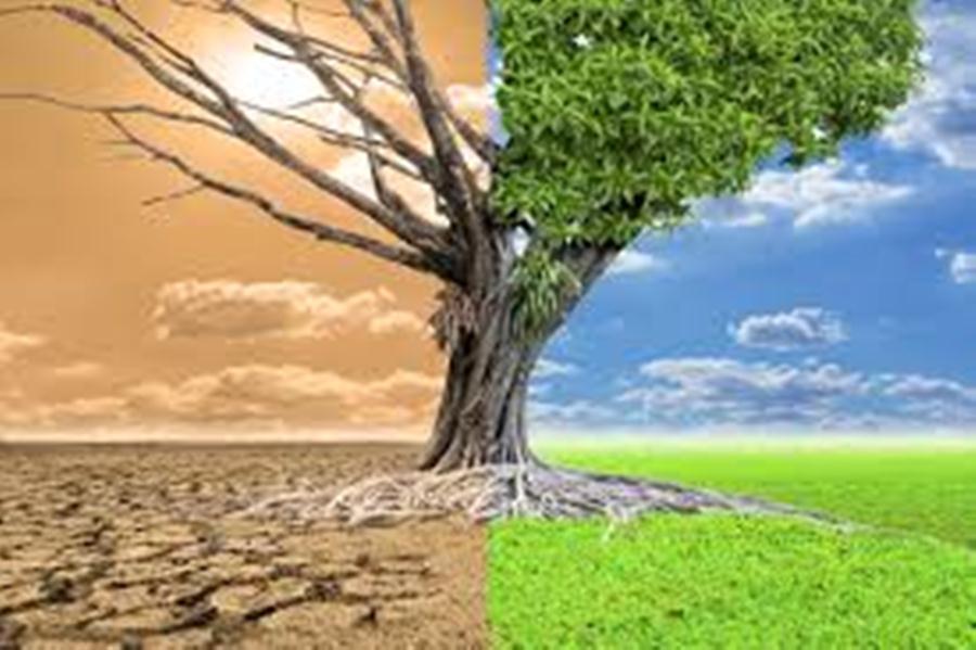 los cambios ambientales se distribuyen de forma