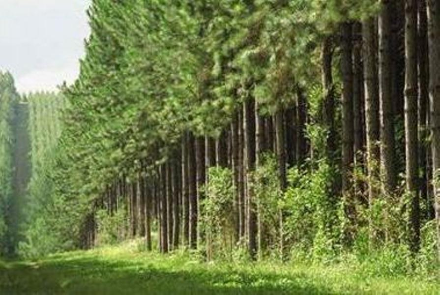 Weyerhaeuser to sell 100,000 acres of timberlands to Twin Creeks for